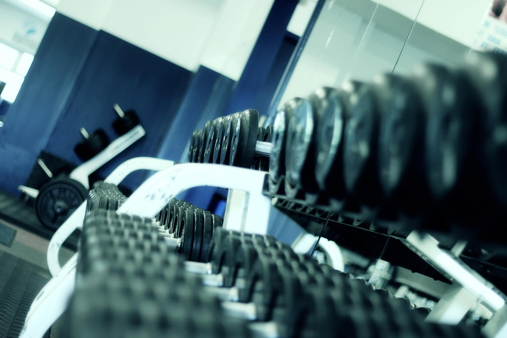 rows of barbells at a gym